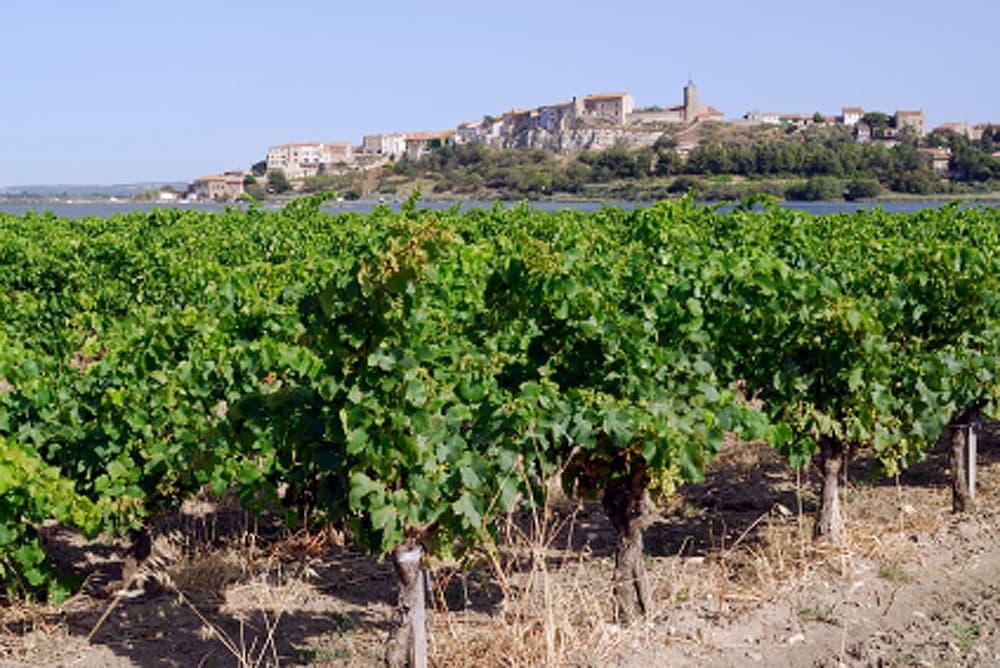 Coteaux de Narbonne